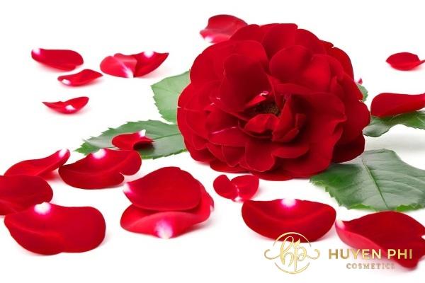 Cánh hoa hồng là một trong các phương thức tẩy tế bào chết cho môi hiệu quả